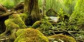 Scena w lesie — Zdjęcie stockowe