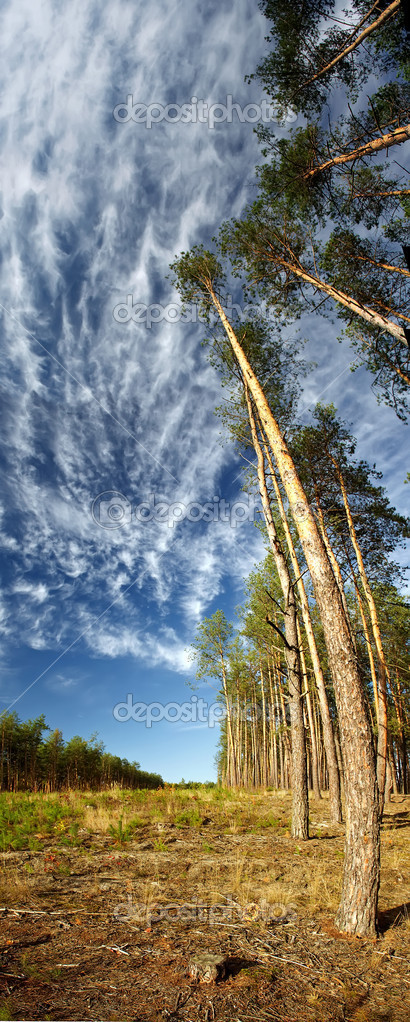 Trees against the blue sky — Stock Photo #8090706