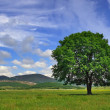 Lonely tree in the valley — Stock Photo