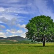 Foto Stock: Lonely tree in valley
