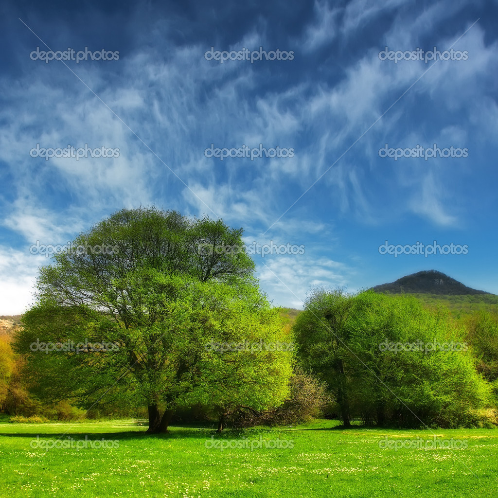 Trees in the valley — Stock Photo #8106222