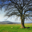 Stock Photo: Lonely tree in valley