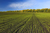 Green field with trees in the background — Стоковое фото