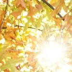de boom in de zon — Stockfoto