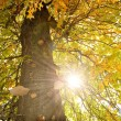 The tree in the sun — Stock Photo