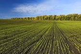 Grönt fält med träd i bakgrunden — Stockfoto