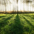 Sunny forest early in the morning — Stock Photo #8881588