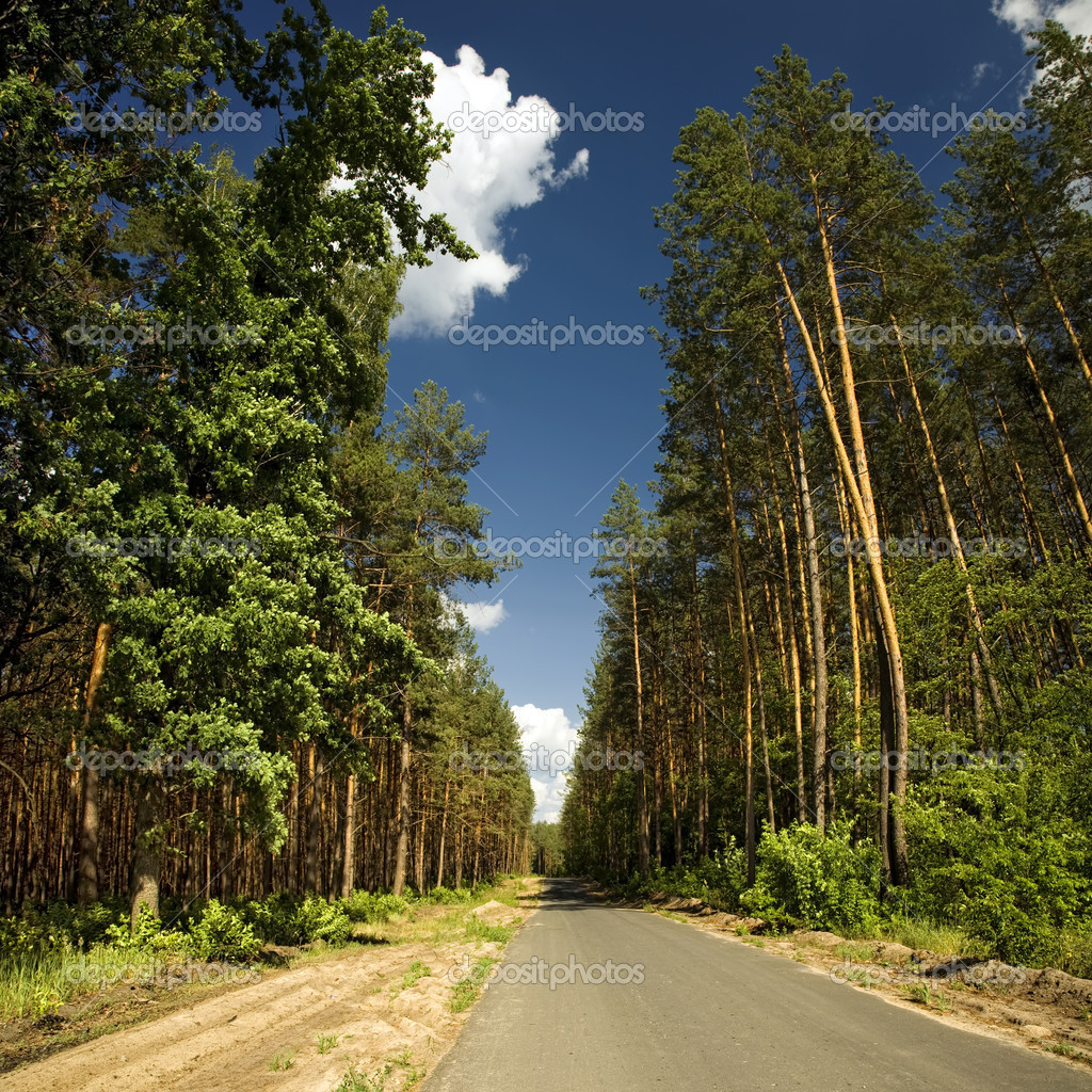 The road through the forest — Stock Photo #8881673