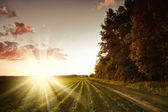 Track near cornfield at sunset — Stock Photo