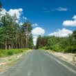 The road through the pine forest — Stock Photo