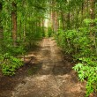 The road through the forest — Stock Photo