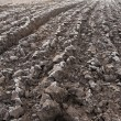Plowed field — Stock Photo #9197485