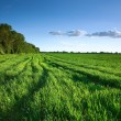 Green field in spring — Stock Photo