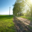 Country road through green fields and rows of trees in spring — Stock Photo