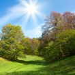 Stock Photo: Spring landscape with green grass and trees and blue sky