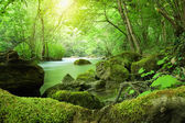 The river in the forest — Stock Photo