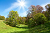Spring landscape with green grass and trees and blue sky — Stock Photo