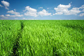 Green field at spring — Stock Photo