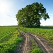 Country road through green fields and rows of trees in spring — Stock Photo #9581381