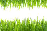 Frame made of wet grass — Stock Photo