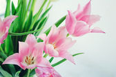 White and pink tulips7 — Stock Photo