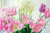 White and pink tulips5 — Stock Photo