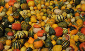 A lot of pumpkins — Stock Photo