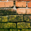 Stock Photo: Bricks with mold