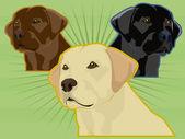 Labrador Dogs — Stock Vector
