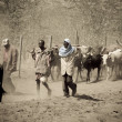 KenyMen walk their cattle to new pastures — Stock Photo #8145538