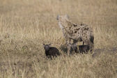 Hyena and cub in the Masai Mara — Stock Photo