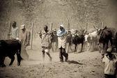 Kenyan Men walk their cattle to new pastures — Stock Photo