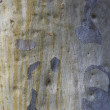 White Iron bark Texture — Foto Stock