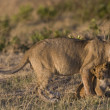 Lioness and her cub in Masai Mara — Stock Photo #8274960