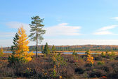 Siberian landscape — Stock Photo