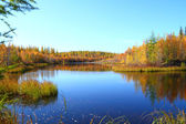 Wood lake in the autumn — Stock Photo