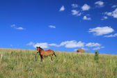 Foal on a hill slope — Stock Photo