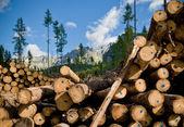 Kácet stromy. — Stock fotografie