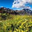 Stock Photo: Mountain meadow.