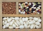Different types of grain — Stock Photo