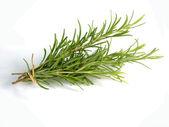 Rosemary twig — Stock Photo