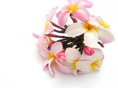 Bouquet of Plumeria flowers — Stock Photo