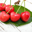 Stock Photo: Red cherries on leaf