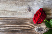 Red rose over wood — Stock Photo