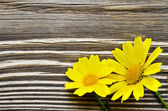 Daisy flowers over wood — Stock Photo