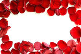 Rose petals frame — Stock Photo