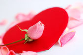 Red heart with rose petals — Stock Photo