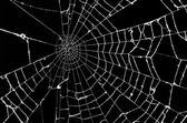 Spider web — Stock Photo