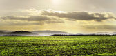 Cultivated green field — Stock Photo