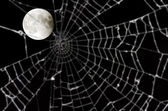 Moon and blurred spider web — Stock Photo